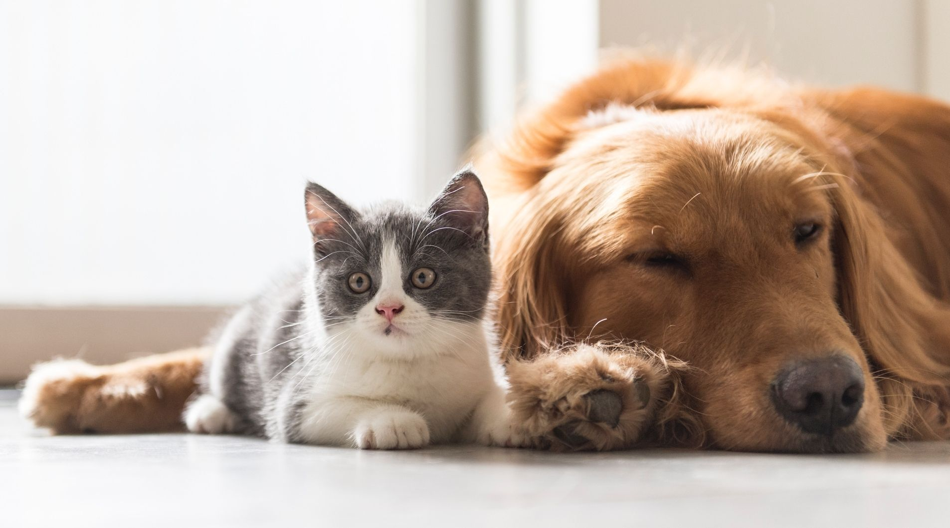 beautiful-kitten-and-brown-dog-in-house-dog-sitting