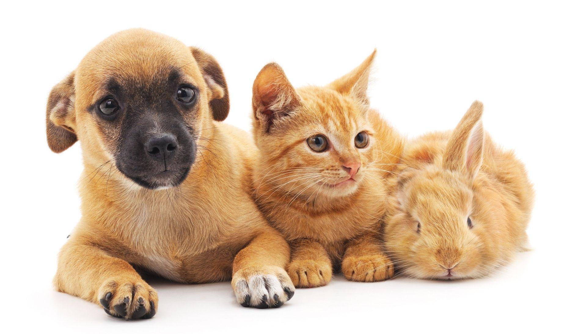 best-dog-walkers-pet-sitters-near-me-christchurch