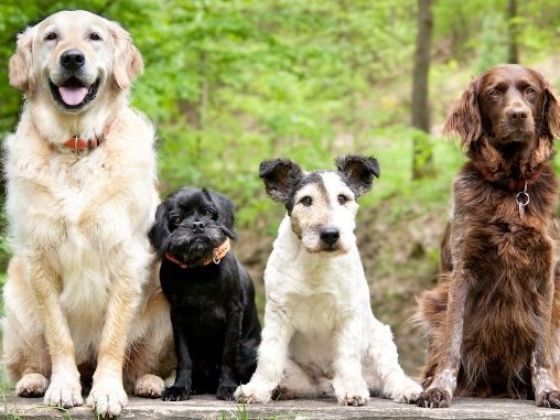 dog walks for small groups christchurch