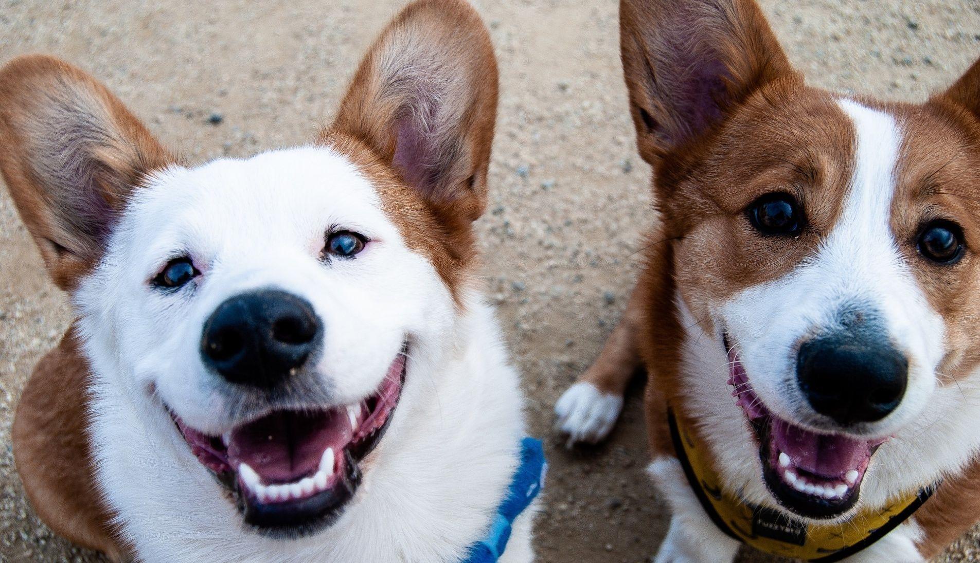 furry-little-rascals-FAQ-dog-walker-pet-sitter-pricing