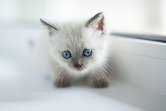 price-list-uns-cat-visits-700x467-153kb-96dpi