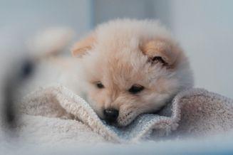 price-list-unsp-puppy-visits-700x467-205kb-96dpi