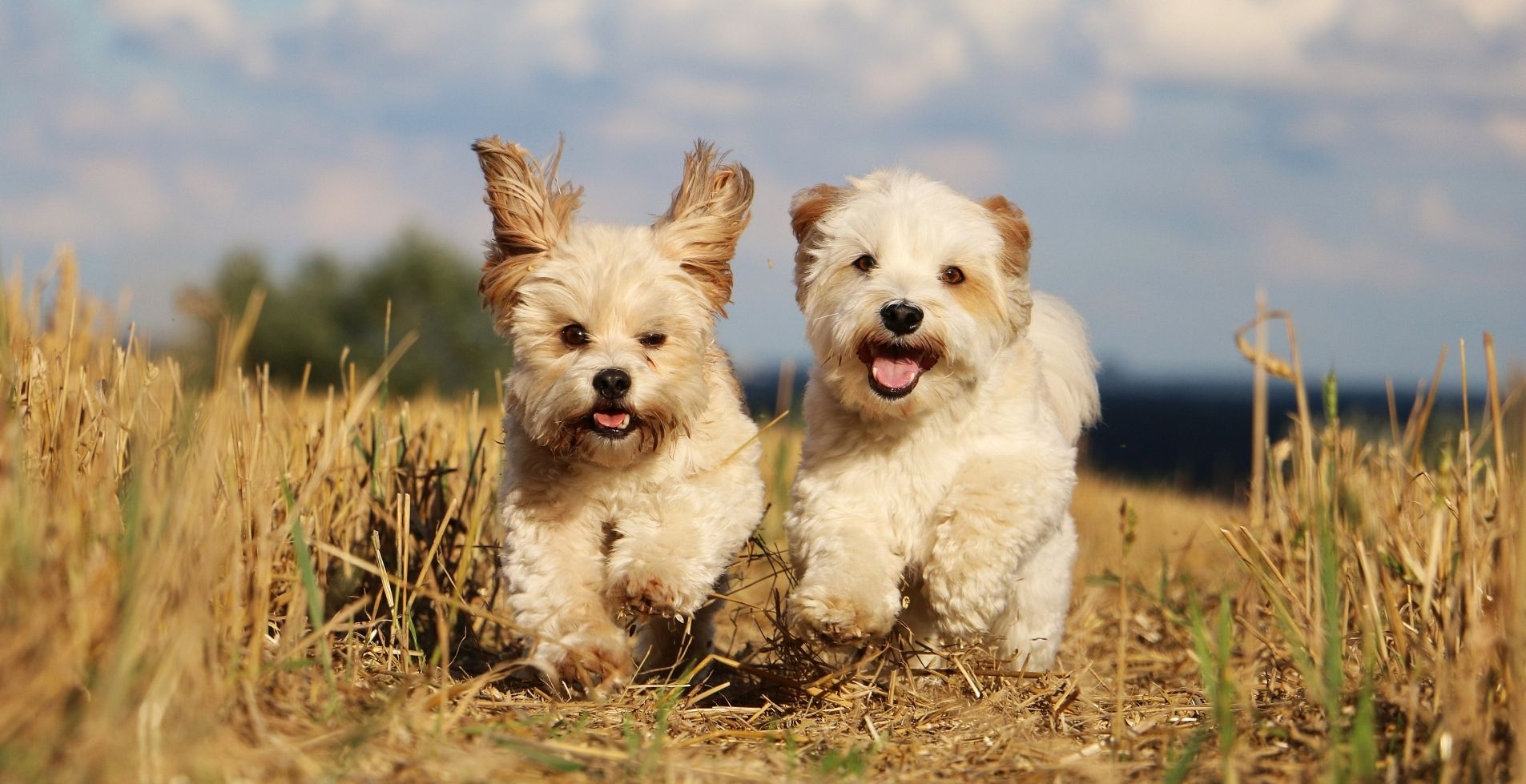 recommended-dog-walker-bournemouth