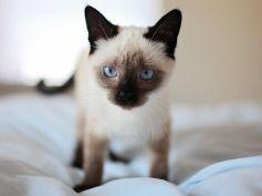 services-pex-cat-home-visits