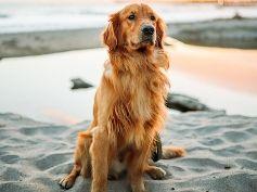 services-un-dog-walking